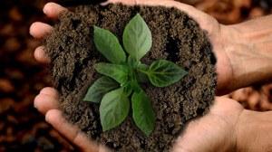 Pflanze in Erde