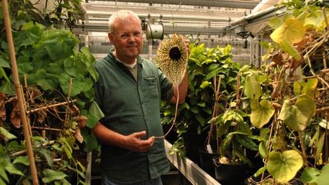 Christoph Neinhuis mit Blüte von Aristolochia grandiflora