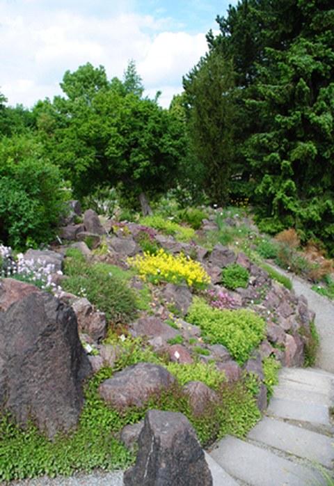 Alpine garden  Dresden Botanical Garden