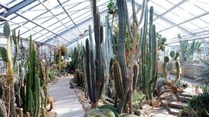 Foto des Amerika-Bereichs im Wüstenpflanzenhaus mit zahlreichen Säulenkakteen.