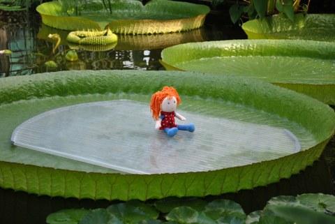 Puppe auf dem Blatt der Victoria-Seerose
