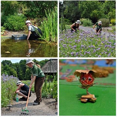 Fotocollage mit 4 Situationen aus dem Freiwilligen Ökologischen Jahr: Eine Freiwillige entfernt Wasserpflanzen aus dem Teich. Zwei Freiwillige arbeiten in einer Gründüngungsfläche und jäten Unkraut. Spielfigur, die Rahmen einer Projektarbeit entstand.