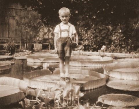 Historisches Foto einer Szene im Victoria-Gewächshaus. Ein etwa 5 Jahre altes Kind steht auf einem Blatt der Victoria-Riesenseerose.