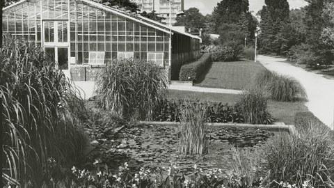 Historische Aufnahme von Gewächshaus und Staudenbeete im Botanischen Garten