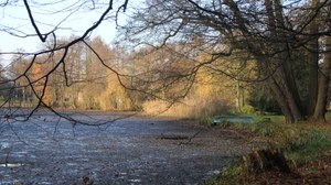Foto zeigt den Schlossteich in Thammenhain, welcher von unzähligen alten Gehölzen umgeben ist.