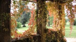 Foto zeigt eine Weinlaube im Gartenreich Potsdam. Sie ist überwachsen von wilden Wein.