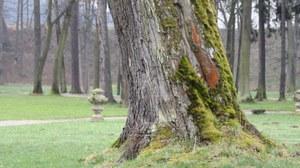 Foto zeigt eine Gartenimpression im Hirschberger Tal. Zu erkennen sind alte Gehölze und eine Vase, die unmittelbar an einen Weg grenzt.