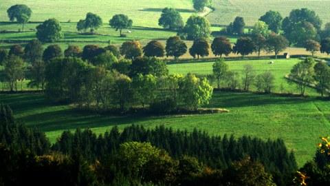 Foto einer Wiesenlandschaft mit Baumreihen