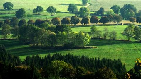Foto einer Wiesenlandschaft