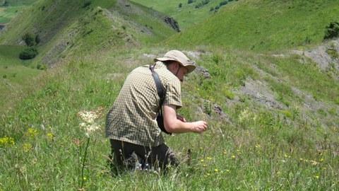 Foto eines Mannes, der Wiesenblumen auf einer Wiese im Kaukasus bestimmt.