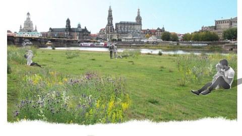 Fotocollage Elbwiesen Dresden mit Blick auf die Altstadt