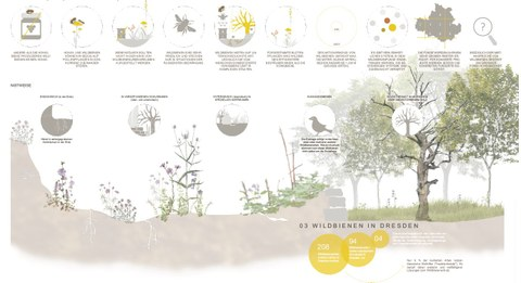 Collage Wildbienen in Dresden