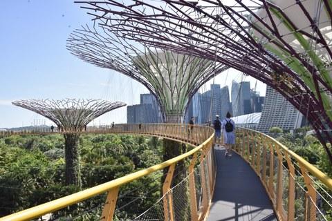 Foto der Singapore Supertrees