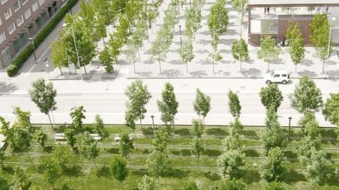 graphische Darstellung eines öffentlichen Platzes mit Wiese, Bäumen und versiegelter Fläche