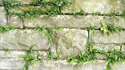 Foto einer Trockensteinmauer mit Farn darin wachsend
