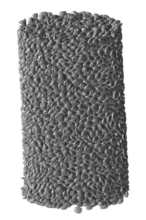3D rendering of a specimen