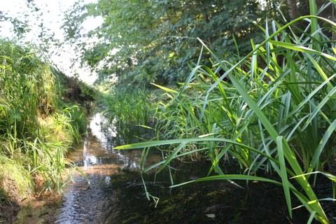 Mutzschener Wasser mit Igelkolben