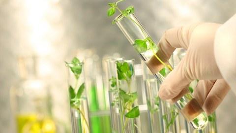 Reagenzgläser mit Pflanzen