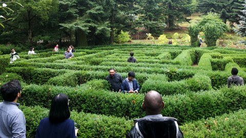Fellows in a hedge maze