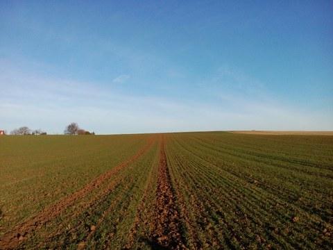 Feld, Landwirtschaft