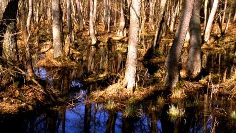 Bäume unter permanenter Staunässe