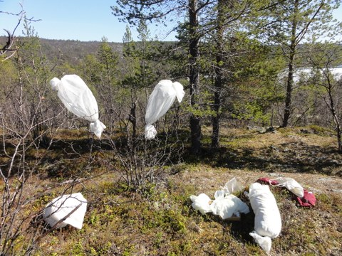 Net sleeves in Kevo, Lapland_J.Fält-Nardmann