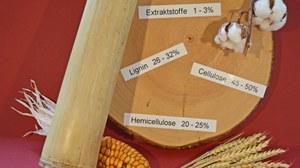 PPflanzenmaterialien