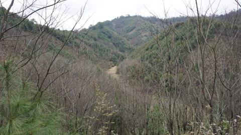 The photo shows the investigation area of ​​the BEF China project. Wooded slopes can be seen.