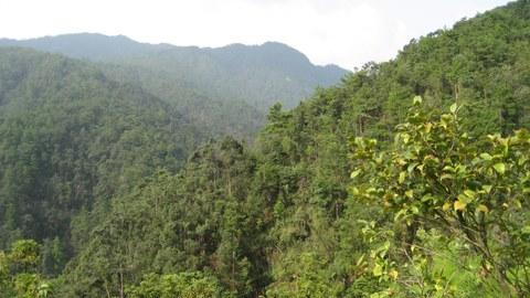 artenreicher subtropischer Wald
