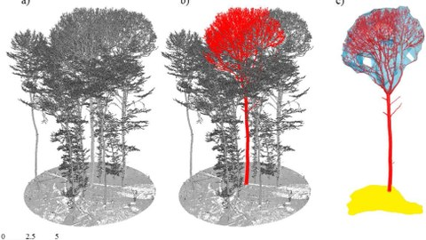 The picture shows three point clouds; left to right: a) Registered point cloud with multiple trees and ground; b) single segmented tree in red; c) crown volume in blue and crown projection area in yellow.