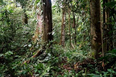 Rain forest in the Darién National Park