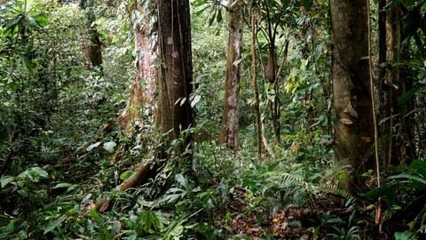 Regenwald im Darién National Park