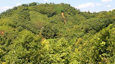 Für das Experiment BEF-China wurden vor rund zehn Jahren auf über 500 Parzellen Wälder angepflanzt, die sich in der Anzahl ihrer Baumarten unterscheiden