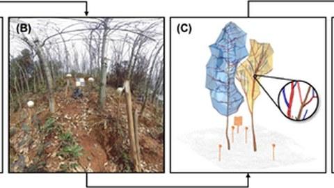 Das Bild besteht aus vier Einzelbildern zur Darstellung der Baum-Baum-Wechselwirkungen