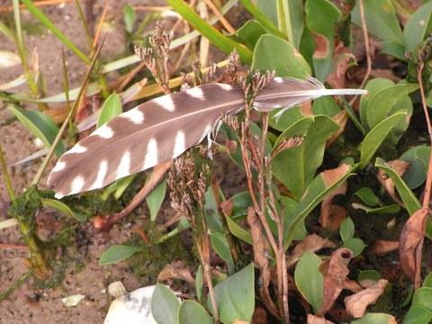 Eine Vogelfeder ist zu sehen, die in bodennähe in einer Pflanze hängen geblieben ist