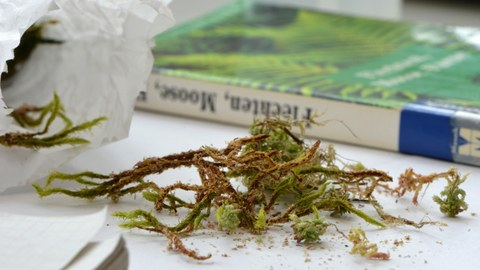 In the foreground there are mosses on a table, in the background there is a moss identification book