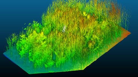 Das Bild zeigt ein Modell einer Untersuchungsfläche. Bäume als Punktwolke stehen auf einem digitalen Geländemodell.