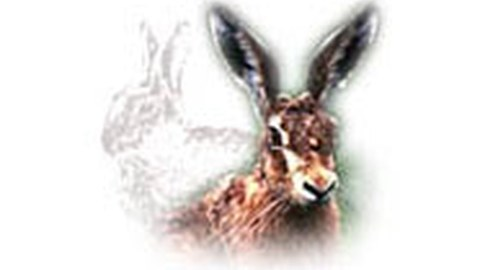 Wildökologie