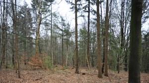 Waldbild Struktur