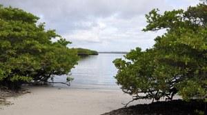 Blick durch den Mangrovenwald auf den Strand und den dahinterliegenden Ozean