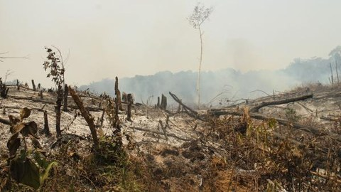 Peat fire in Indonesia. The fires are below the surface where the peat smoulders.