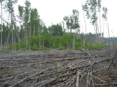 Mangrove Forest Gap
