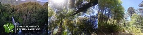 Fotos von Nothofagus und Araucaria Wäldern in Südchile