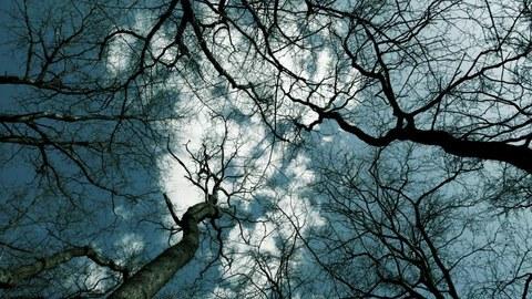 Blick in die Baumwipfel. Die Kronen mehrerer Bäume ohne Blätter sind zu sehen. Dahinter der blaue Himmer mit einer weißen Wolke.