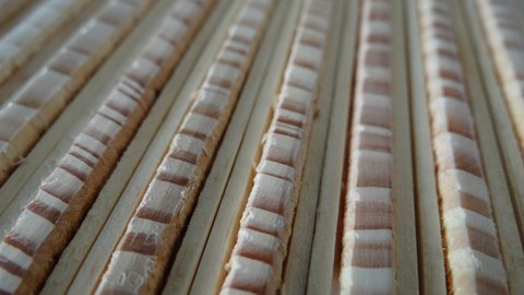 Tree rings of Scots pine