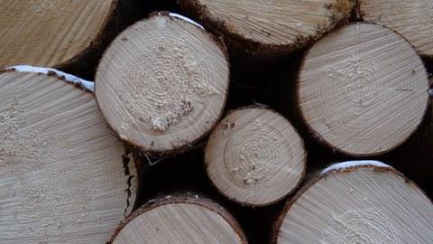 Tree rings spruce