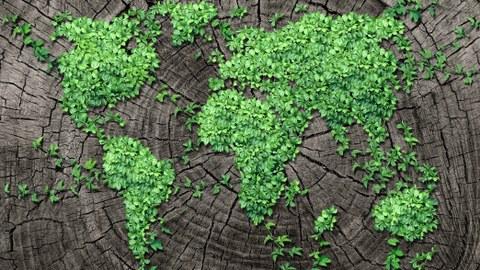 Darstellung der Kontinente durch grüne rankende Pflanzen auf einem Baumstamm
