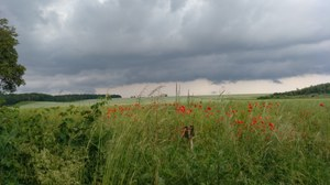 Agricultural landscape with a red flower strip and a cloudy sky.