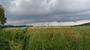 Landwirtschaftliche Landschaft mit einem roten Blumenstreifen und einem bewölkten Himmel.