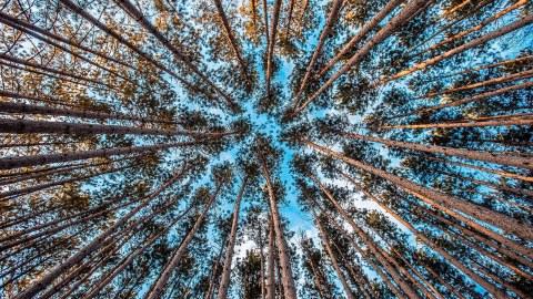 Bäume die in den Himmel ragen